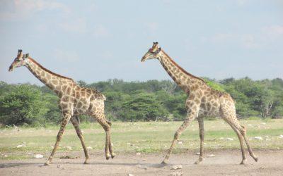 Zambezi Sunrise Trust Race Night: June 8th